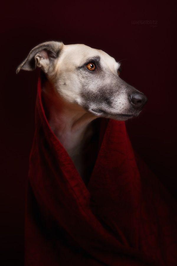 concours de portraits : pour » Seriah» : composez le 3