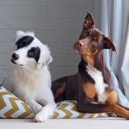 dogs penchés