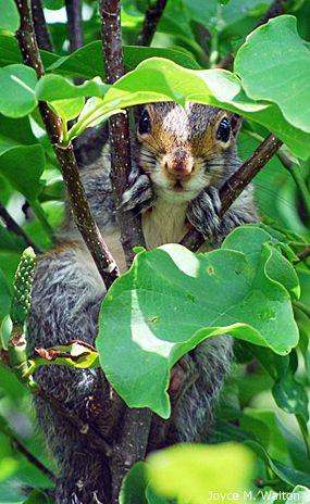 ecureuil surpris